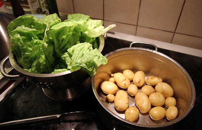 Salathoved til mormorsalat og 400 g nye kartofler. Det er fra drivtunnelen.