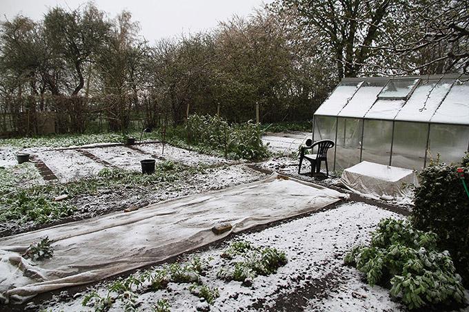 Sne i haven 28. april sidste år.