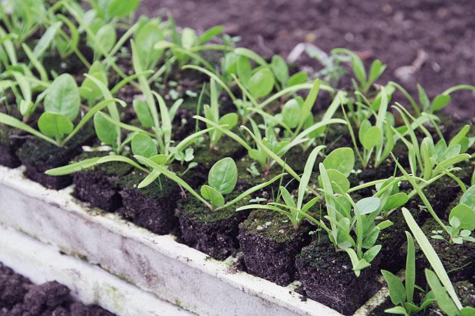 Smart systemn med at man lige kan skubbe alle planterne op, så de er lette at få fat i.