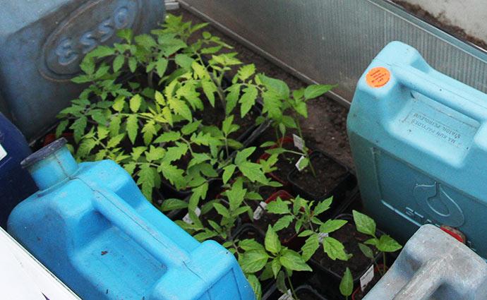 Planterne er noget mindre for 5 dage siden den 12.april