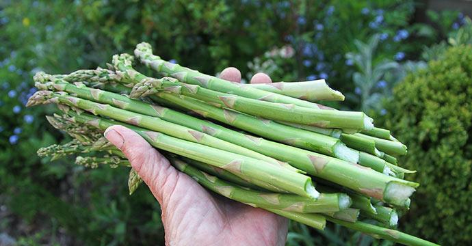 En håndfuld asparges - det gør glad.
