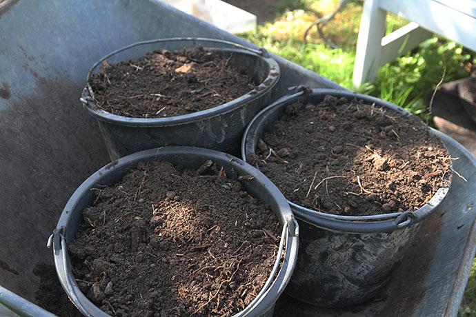 En spanfuld omsat kompostjord til hvert plantehul. Komposten må gerne være knap så omsat.