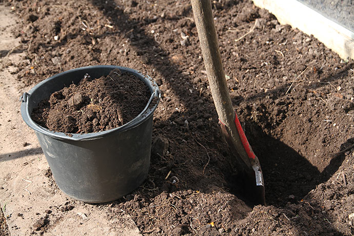 Jeg skifter ikke jorden i drivhuset, men fjerner en spandfuld jord, hvor tomatplanten stod sidste år.