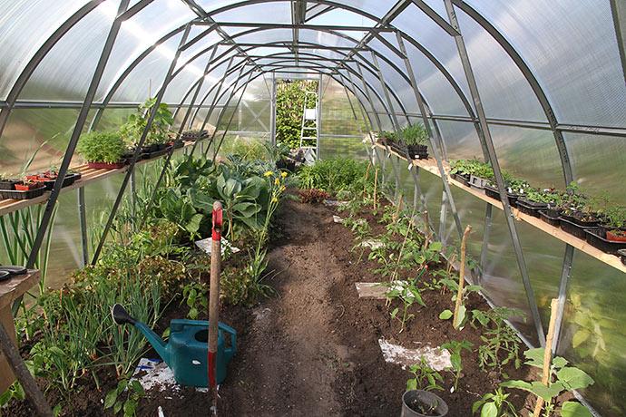 Nu er hele drivtunnelen plantet til, minus nogle kvadratmeter, hvor der er spidskål