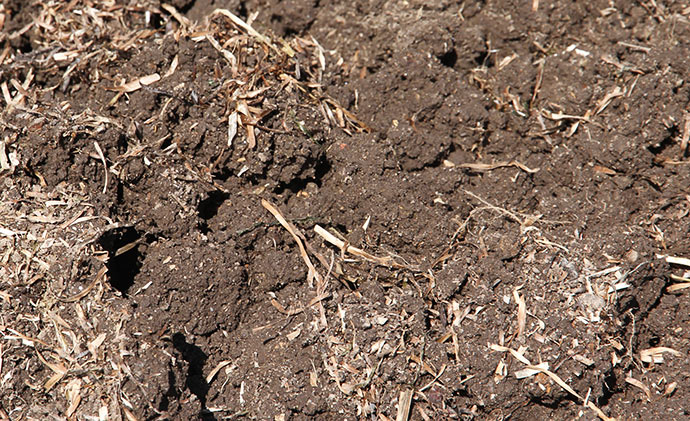 Så løs og lækker var jorden, da gulerødderne var gravet op.