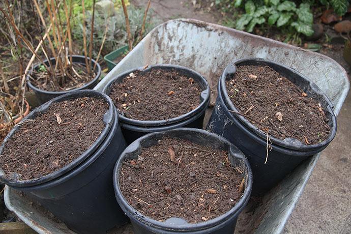Det er et slæb med de store potter, når de er fyldt med jord.