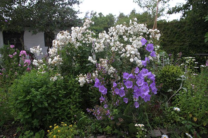 Hvid buketroser og klokkeblomster.
