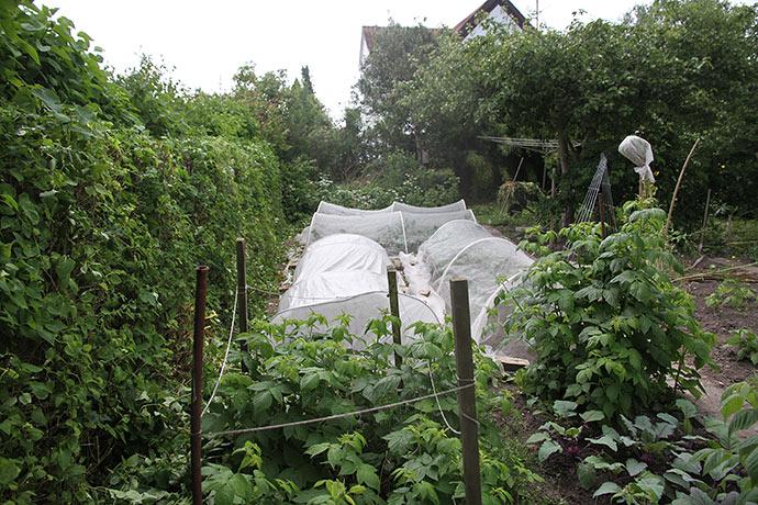 Syrenhæk er blevet klippet tilbage, så grønsager og hindbær kan få lys.