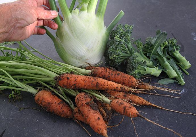 Grønsager til aftensmaden: gulerødder, broccoli og knoldfennikel.