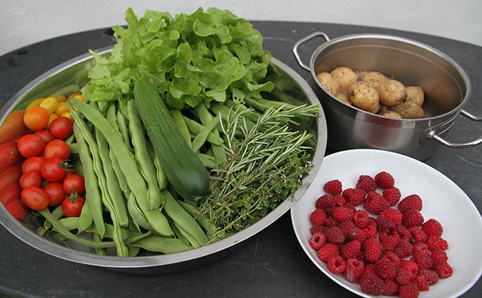 Høst af grønsager og bær til aftensmad i aften. Vi kan dog ikke spise alle bønner og kartofler, så noget må gemmes.