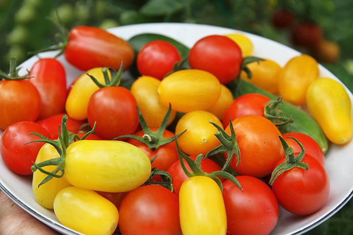 En tallerken tomater til froskostbordet med mange forskellige sorter.