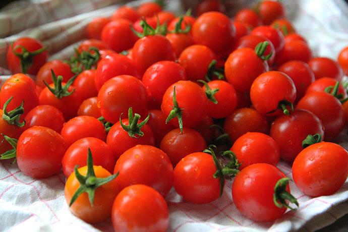 Masser af små tomater til at tørre.