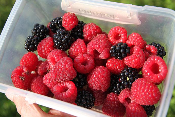 Lidt hindbær og brombær til dessert.