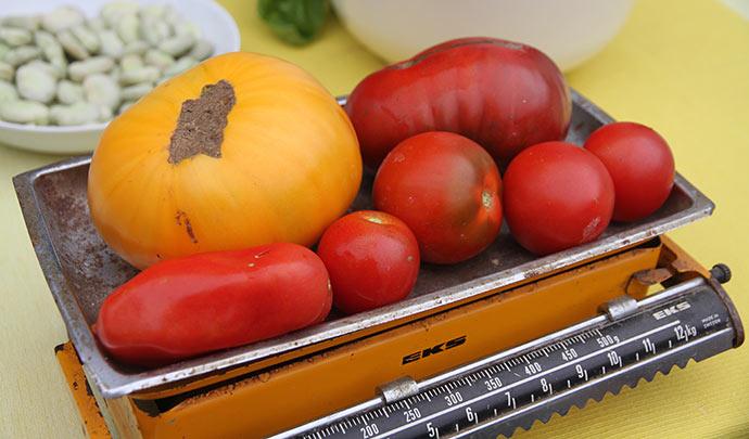 1250 g tomater af mange slags.