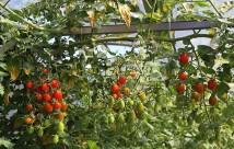 Toftegaards miniblomme hænger ned fra en vandret bjælke i drivtunnelen.