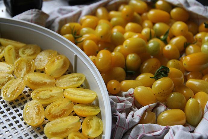 Karnas gule blommetomater er fine til at tørre.