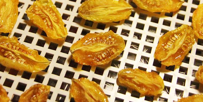 Semidry gule tomater - nu skal de bare tørres lidt mere for at de kan spises som slik.