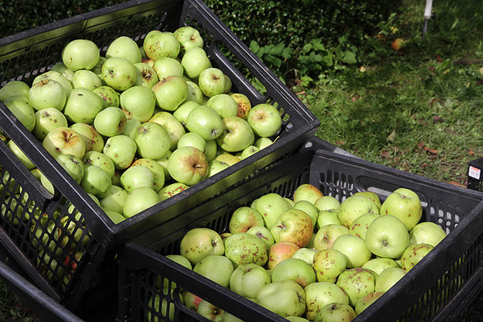 To af de 11 kasser Filippa æbler.