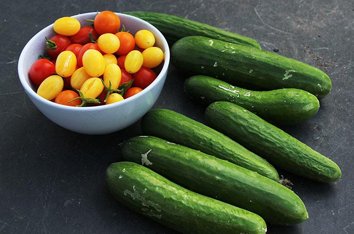 Tomater til frokost og masser af agurker igen.