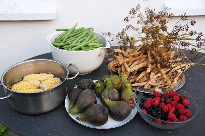 Bønner, majs, figner, hindbær og brombær. Desuden frø af dild og bønner.