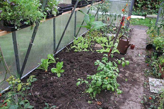 Endnu et stykke jord i drivtunnelen gøres klar. Her skal der plantes store salatplanter.