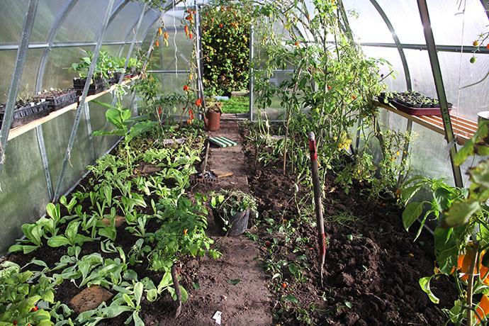 Det giver lys, luft og liv at få nye planter ind i drivtunnelen.
