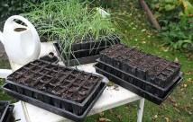 Sidste såning i år: lidt forskellige slags hovedsalat, egebladet salat og Cerbietta..