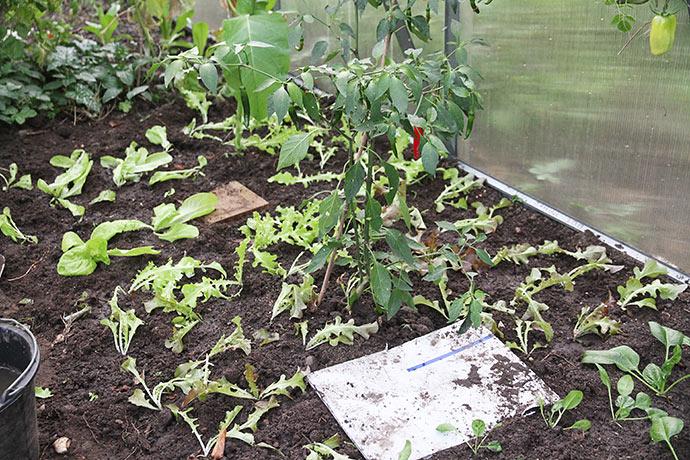 Der var en til tre planter i hvert rum i rootraineren.