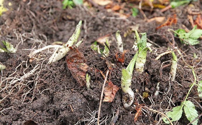 Hvad er nu det har for nogle spirer, der dukker op, når jeg graver.