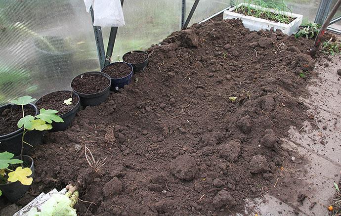 Jeg gravede ud, så kålhovederne kommer lide under jordnive