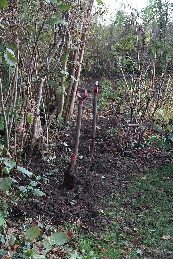 5 m ryddet areal langs hasselhækken. Sneglehegnet skal stå ca. hvor spaden står og videre til venstre for jordbærbedet.