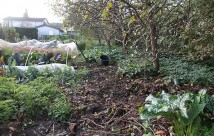 Sneglehegnet skal sættes op i enden af grønsagsbedene ned langs den ryddede zone.