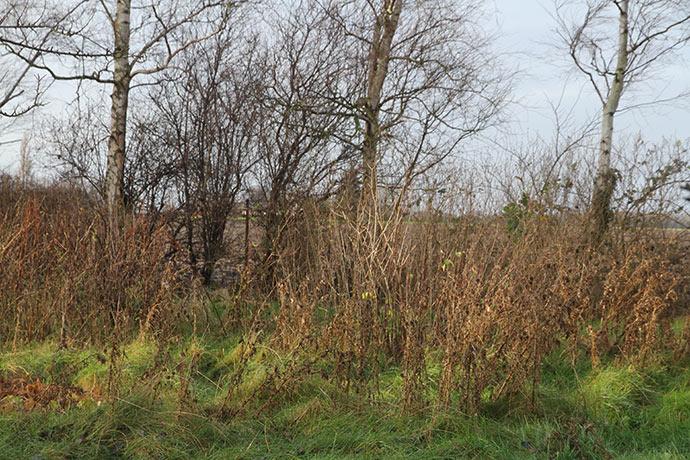Her er der god læ mod vest ud mod nabomarken, der dyrkes konventionelt.