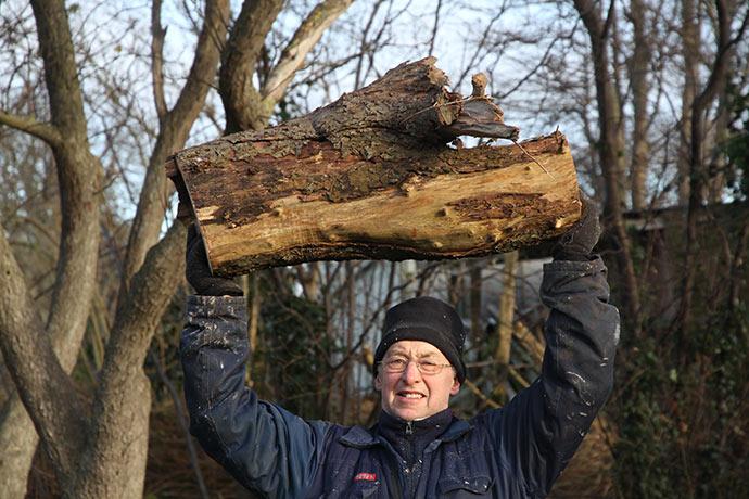 Det er godt med en stærk mand, når der skal fældes træer.