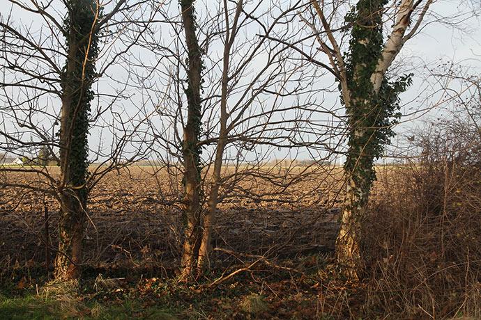 Nogle steder mangler der en række buske som bundlæ mellem birke og ahorntræer.