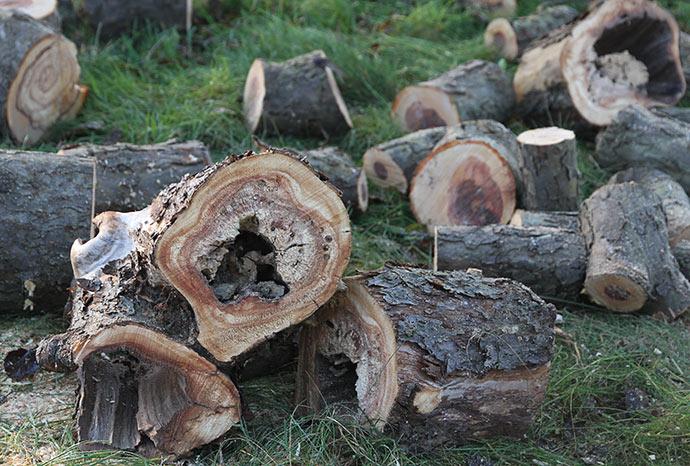 Træ med råd er utrolig smukt, men desvære er brændværdien ikke særlig stor.