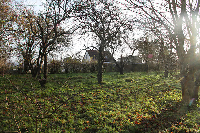 En del af træerne i frugthaven skal fældes og give plads til køkkenhavebede..