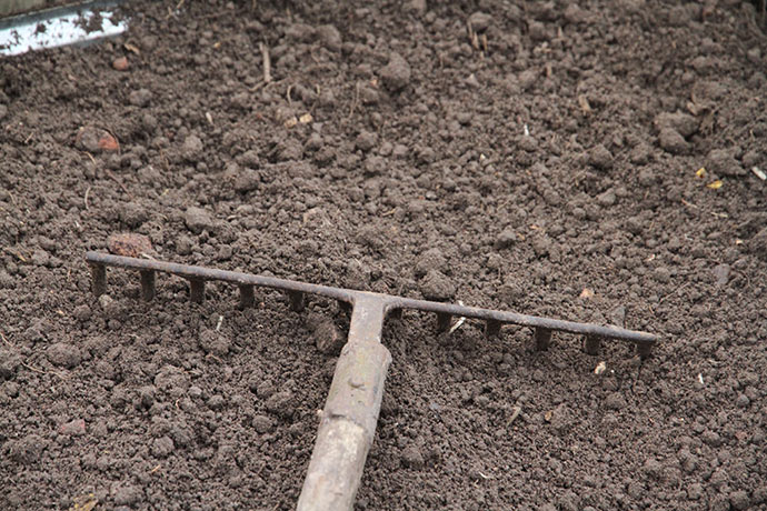 Jeg kunne næsten ikke holde op med at kultivere og rive den lille firkant jord.