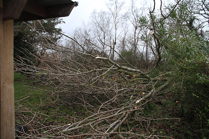 Der ligger også grene og træstammer i en stor del af nabohaven. Her starter vi med at rydde op.