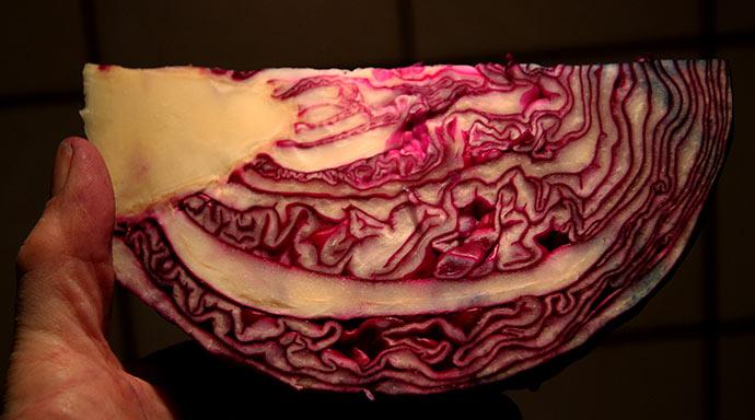 Rødkål af sorten Rodynda fra Bingeheimer Saatgut-