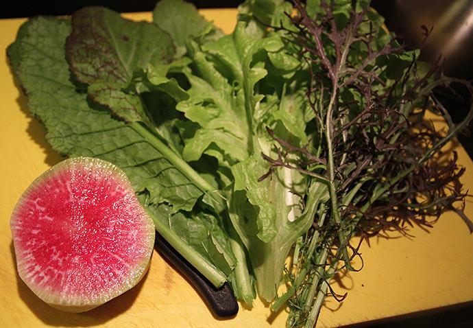 Fra venstre: Kinesisk radis 'Watermelon', sareptasennep 'Red Giant', grøn egebladet salat, sareptasennep 'Moutarde Rouge Metis.