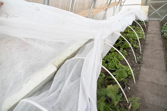 Dækning af bedet med salatplanter med styroporplader og fiberdug i flere lag.