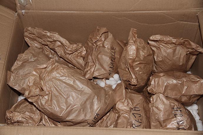 Kasse med masser af læggekartofler.