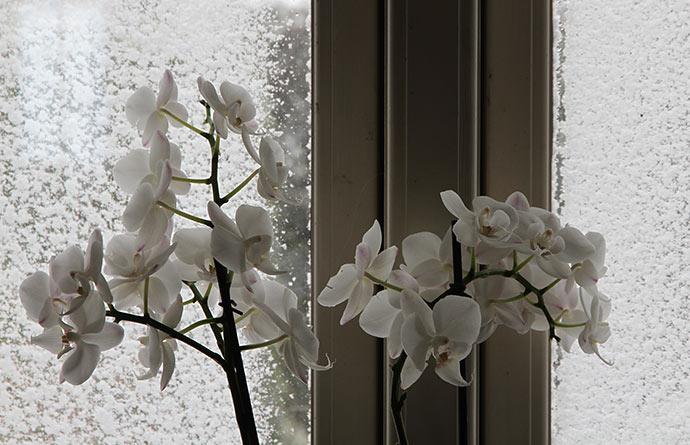 Når det sner, kan man slet ikke se ud af vinduerne i stuen.
