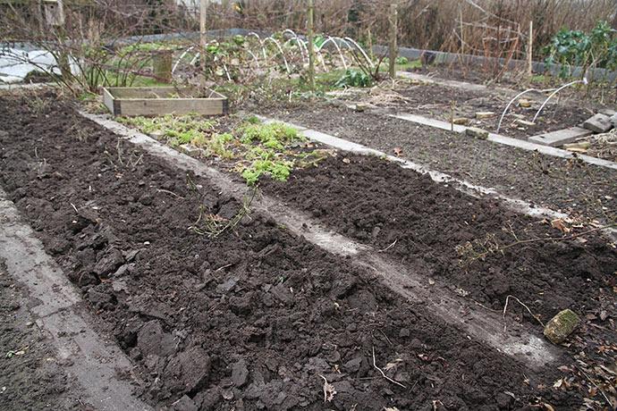 Vintergravet jord - et særsyn i min have.