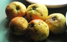 Små runkne Jonagold æbler.