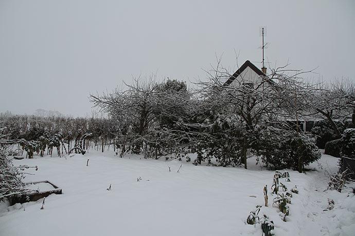 Under det her tykke lag sne står alle mine hvidløg. Jeg kan slet ikke se dem.