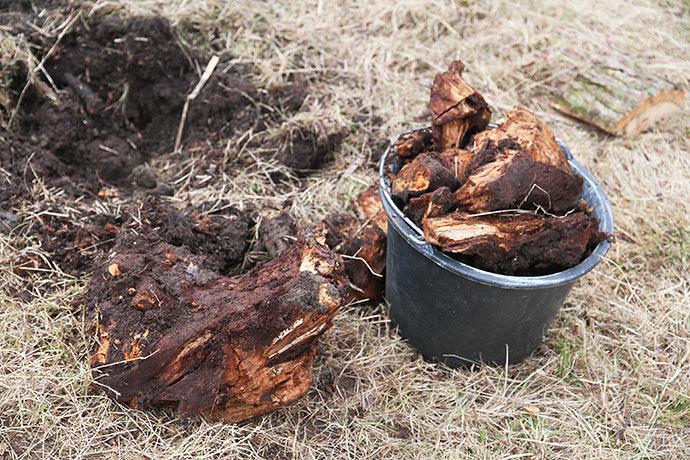 Det går lettere at fjerne en rådden træstub.