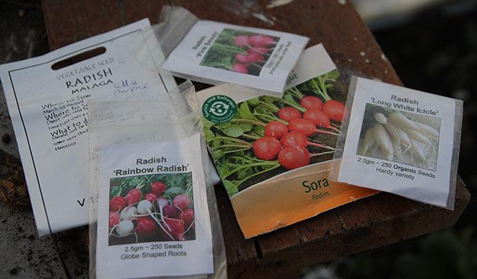 Jeg har sået de her sorter af radiser.