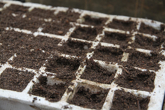 Såbakken fyldes med jord, og når jeg presser jorden let sammen i hullerne, passer det med sådybden.